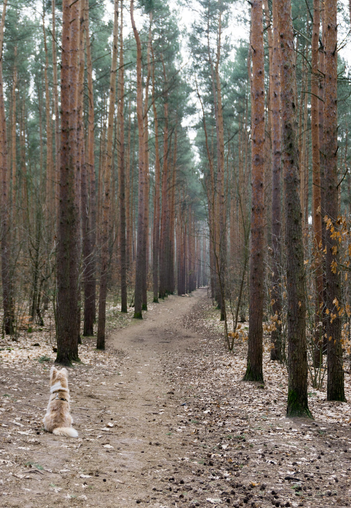 This Is Probably My Favorite Photo of the Experience. This Dog Looks Like a Loner But is Protecting the Back of the Pack. My Airbnb Experience in Grunewald Forest in Berlin, Germany, March 6, 2018.