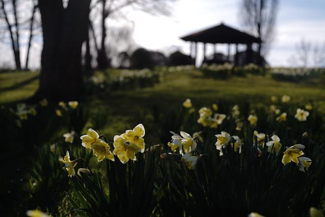 spring light@Wertwiesenpark,Heilbronn