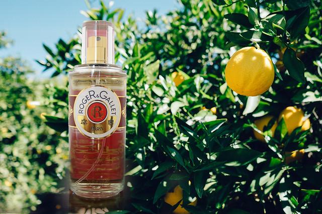 Et votre parfum ? - Page 9 40582563144_b75bdb5985_z