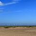 Windfarming ~ Windbreaking