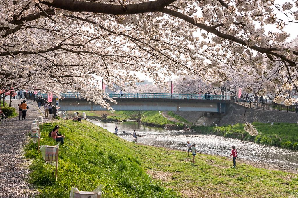 黒目川花見2018