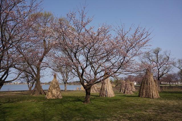 Travel around the Kiba lagoon