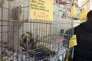 Noicattaro. divieto animali front