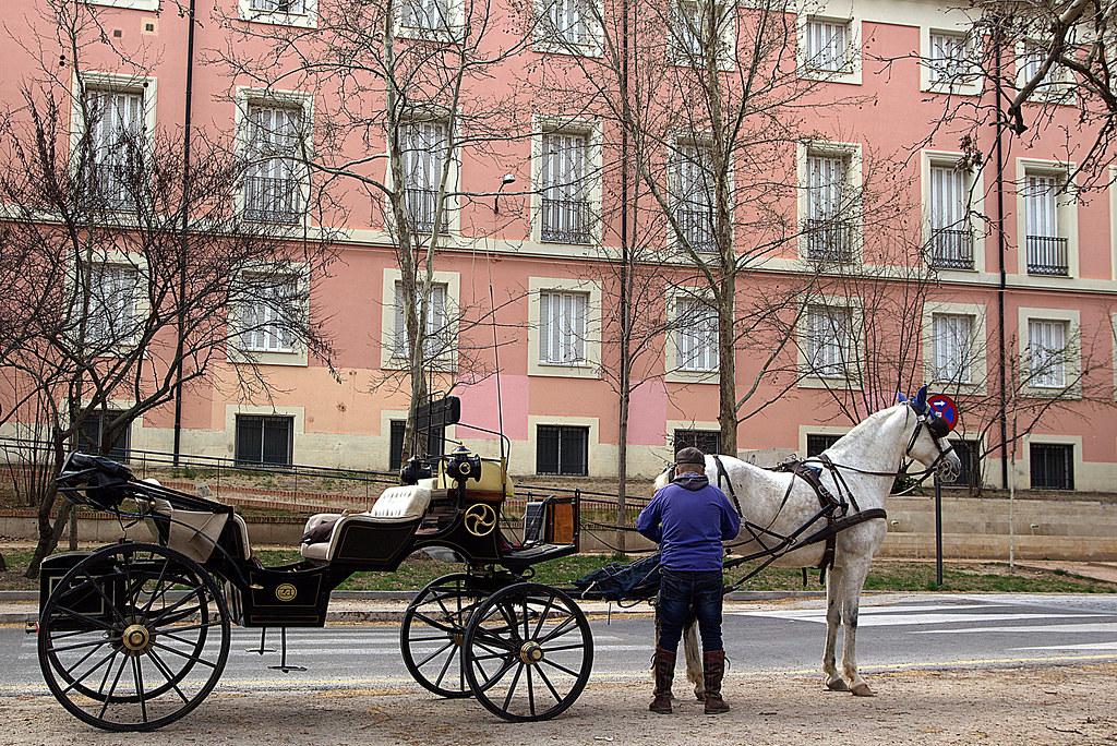 coche de un caballo