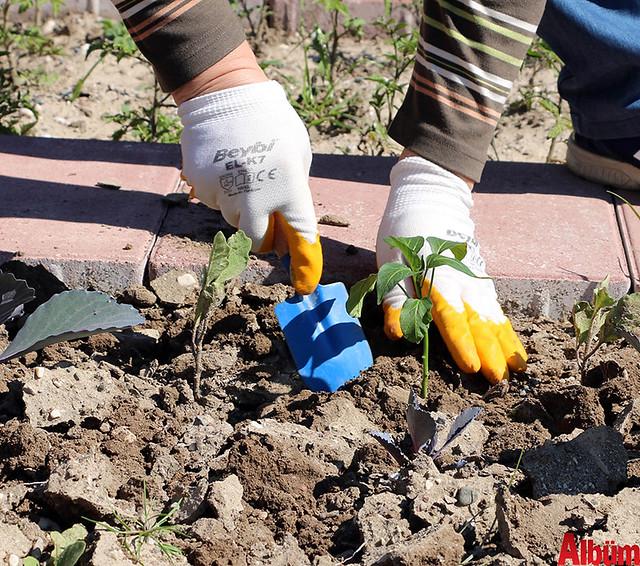 Antalya Büyükşehir Belediyesi emekliler hobi bahçesi- ilk hasatı aldılar -6