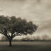 Mission Tree