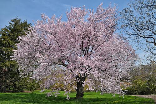 New York Botanical Garden, Bronx, New York