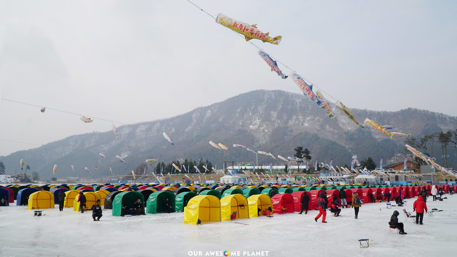 Trout Festival at the Winter Wonderland 📍 Pyeongchang, South Korea