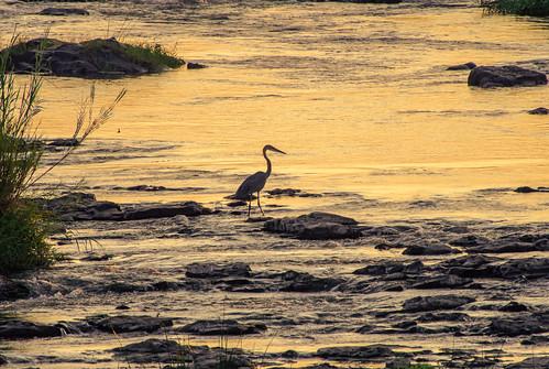 krugernationalpark ngwenyalode sunset hdr nature wildlife