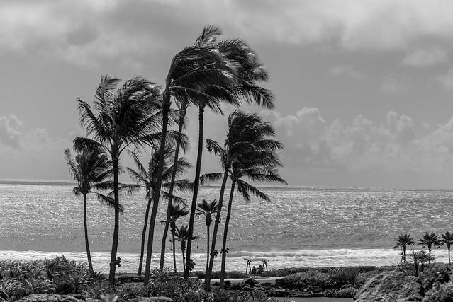 A Couple Looking at the Beach, Kauai, Hawai'i, USA