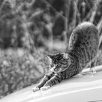 20180330-164421 - Car Cat Bokeh