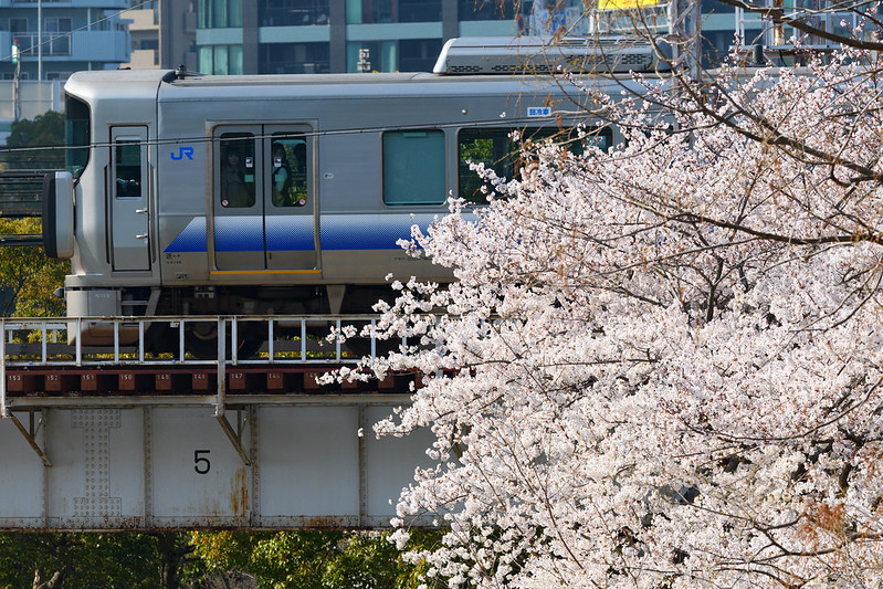 2018 SAKURA TRAIN