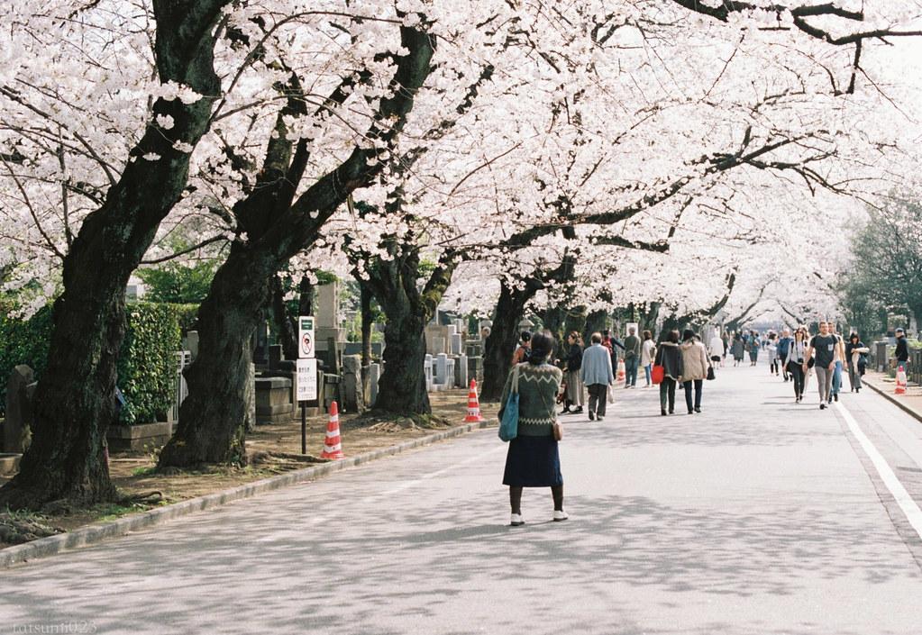 2018-03-30 谷中の桜 001