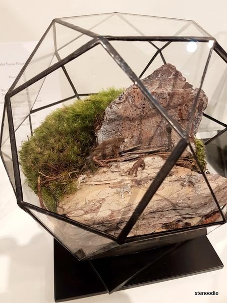 Wild Thyme landscape terrariums