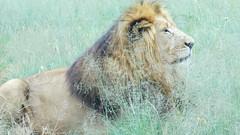 Lion & Safari Park. South Africa. Mar/2018