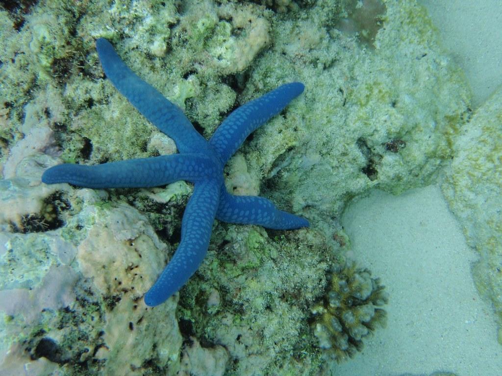 starfish-583650_1920