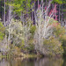 Small photo of Bear Lake, Blackwater River State Forest