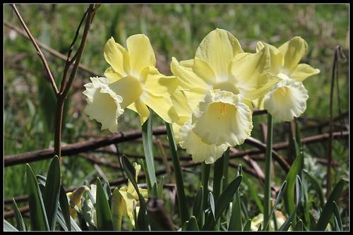 explosion florale - Page 3 27672311788_8b3c6bb3ff