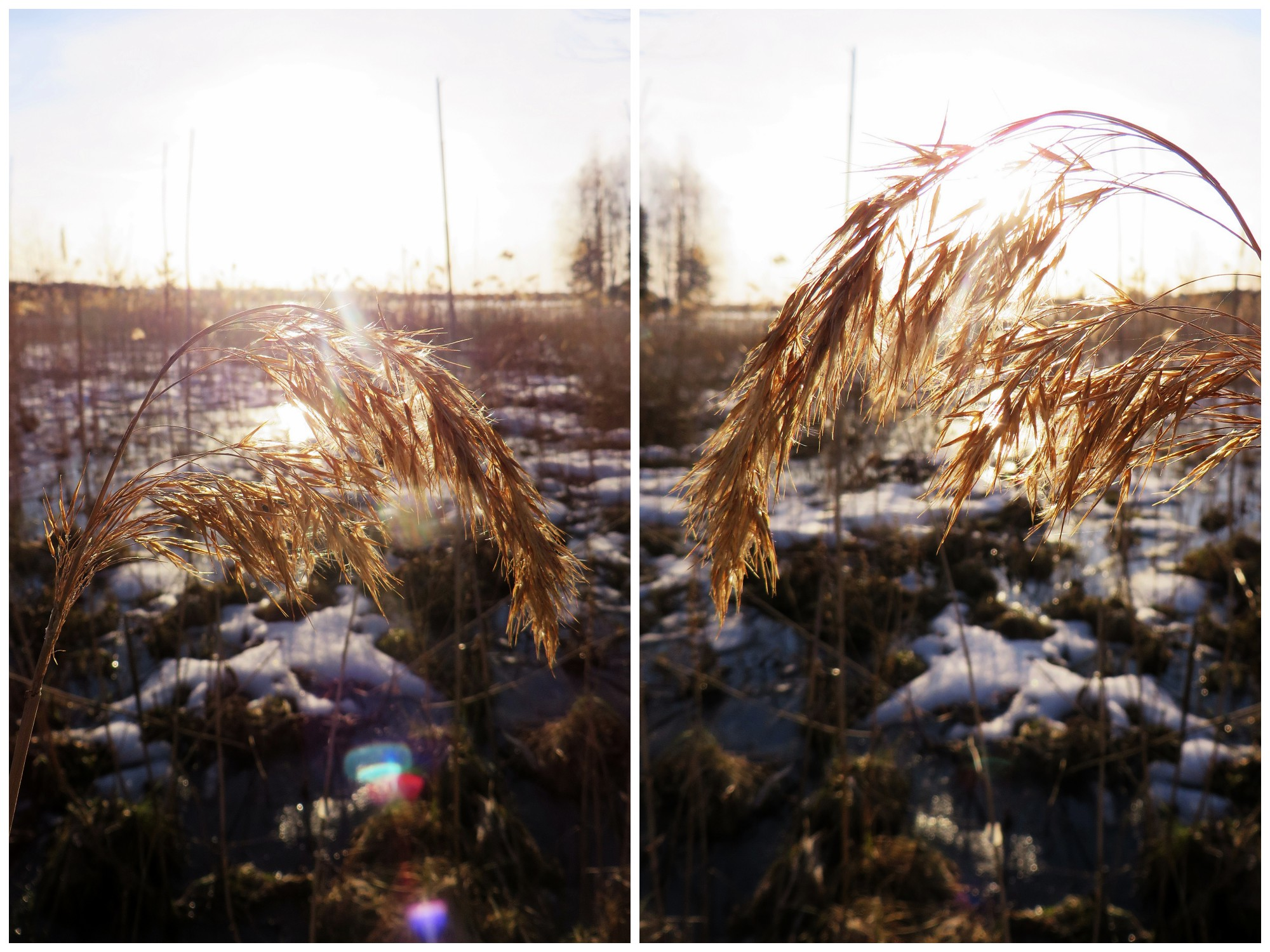 kevätkuvia2