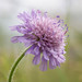 Wild flowers of Hurst Water Meadows by ceeko