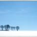 Vinterbilde fra Hovin by Krogen