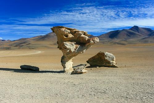 arboldelapiedra desert rocktree uyuni departamentodepotosí bolivia bo