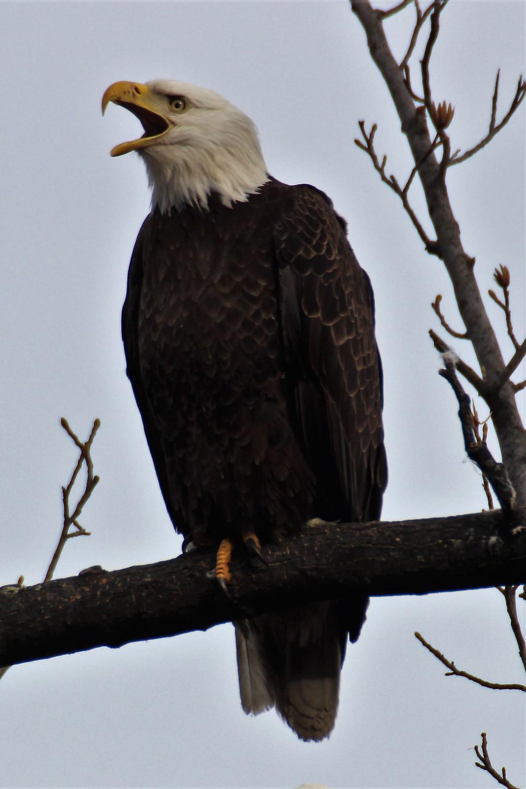 Piermont Marsh Wildlife
