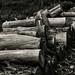 Wood Pile (91/365)
