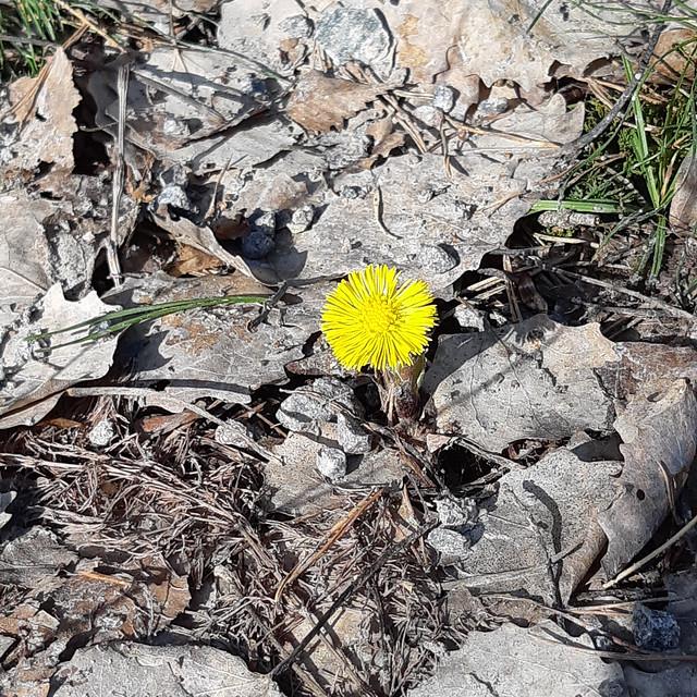 Veckans Nay - Pollen