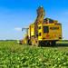 Sugar Beet Harvest   ROPA