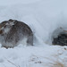 Mountain Hare and Winter Residence. by Sandy MacLennan