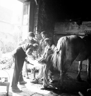 Personnel of the 7th Canadian Infantry Brigade watching a blacksmith shoeing a horse, Creully, France / Personnel de la 7e Brigade d'infanterie canadienne observant un forgeron ferrant un cheval, Creully (France)
