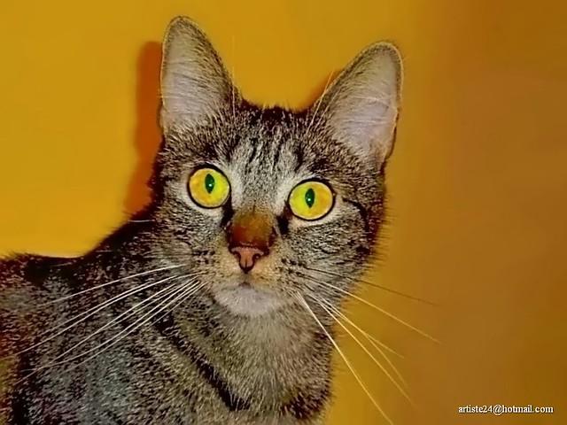 Minus Cat (5)