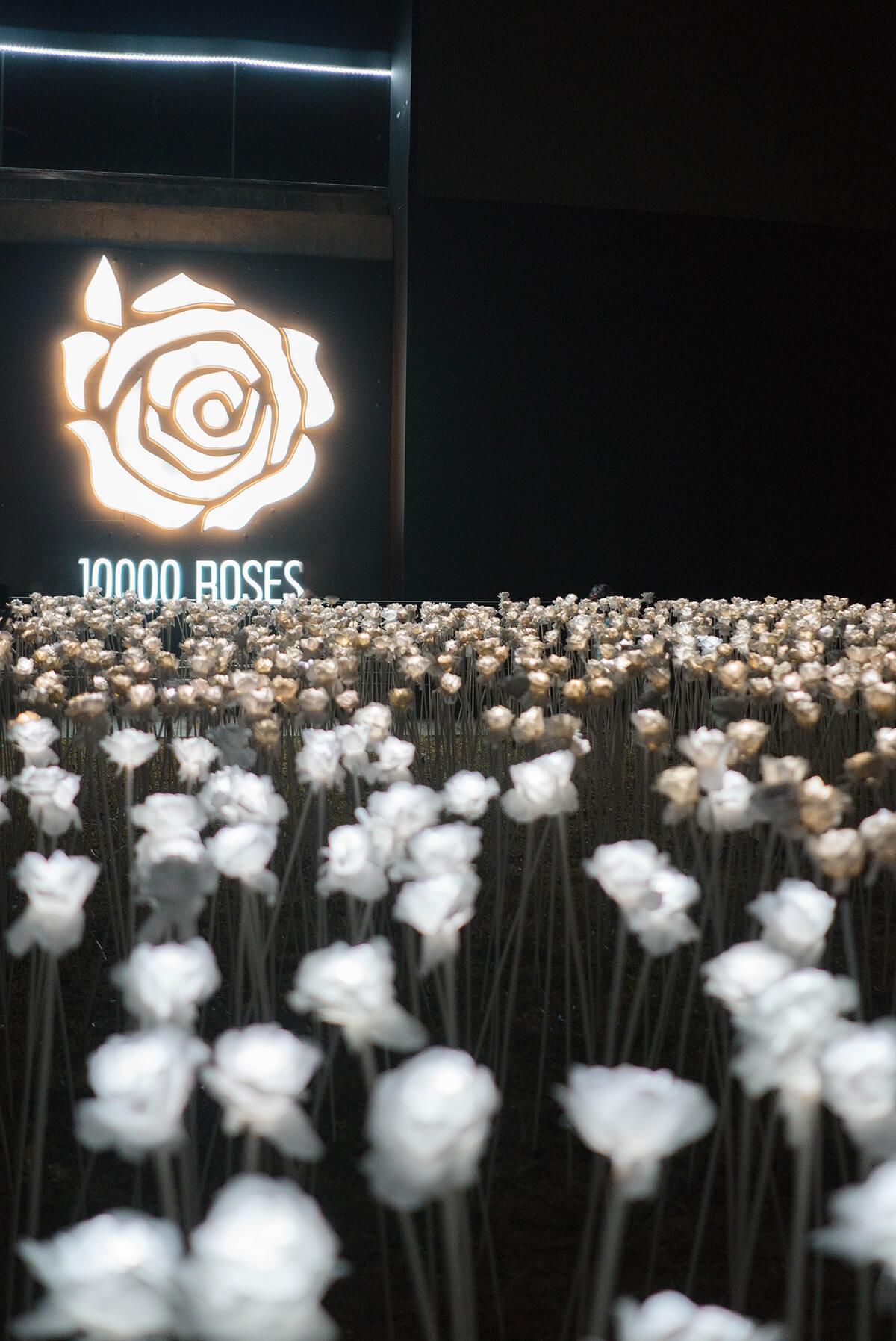 Trice Nagusara Cebu 10000 Roses