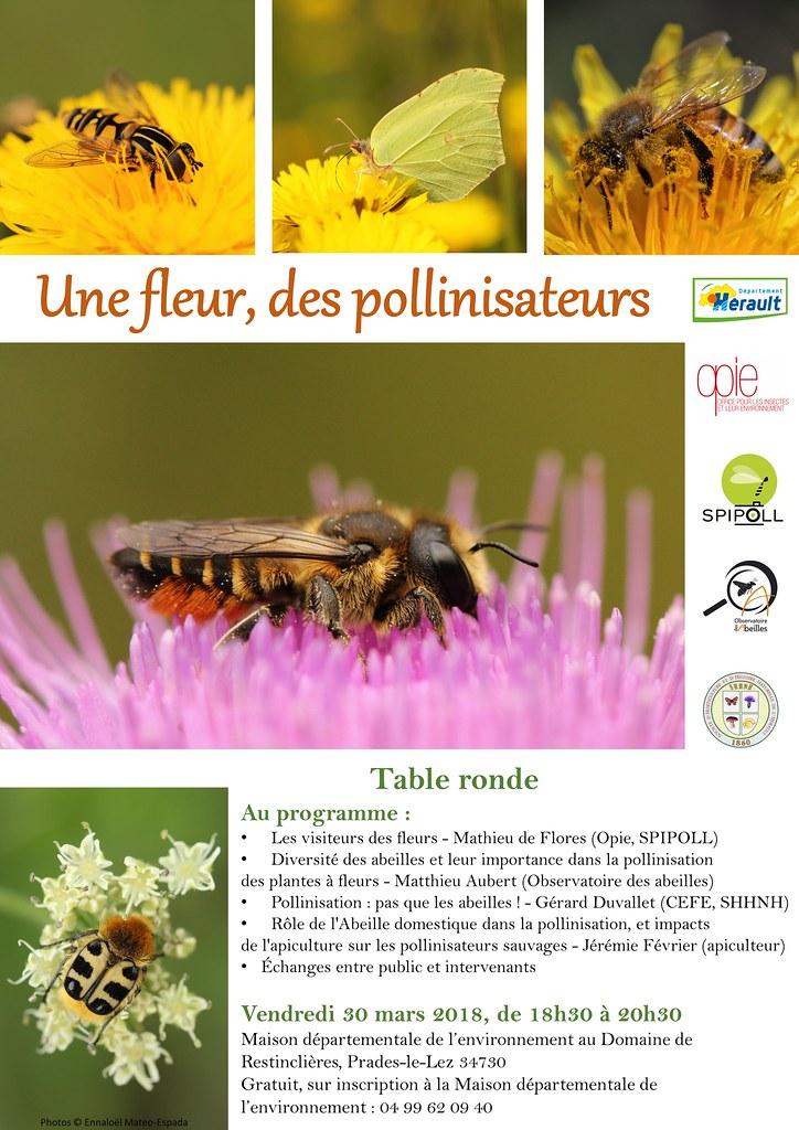 Table ronde Pollinisateurs le 30/03/18 à Prades-le-Lez (34) 27095619818_4f587e6eb4_b