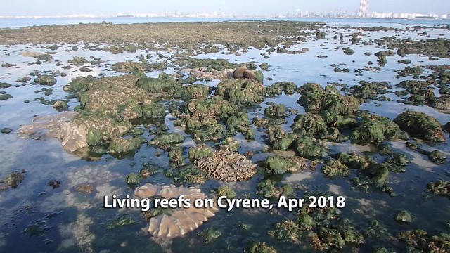 Living reefs of Cyrene Reef