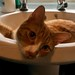 Sid in the sink!