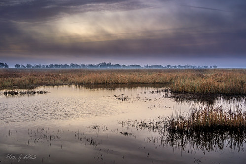 california clouds colusa colusacounty colusanwr colusanationalwildliferefuge dawn morning pond reeds sacramentonationalwildliferefugecomplex sunrise water unitedstates