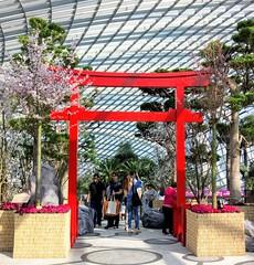Garden by the bay - Sakura
