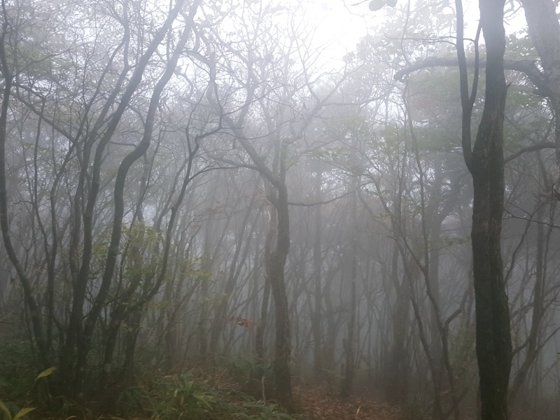 Huangshan fog