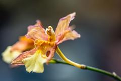 Orchid Spectrum 2018. U.S. Botanic Gardens and Smithsonian Gardens.