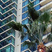 Palm Tree in front of The Grande Condos in Downtown San Diego, CA by sanfrancisco2005