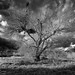 Another day, another tree... by David A Evans