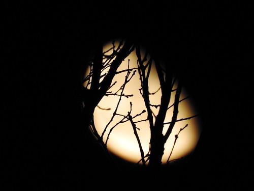 Cavenago di Brianza - Luna tra i rami