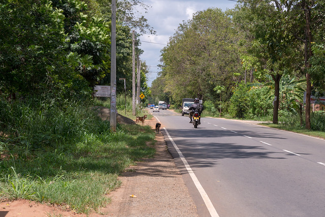Thanamalvila Road