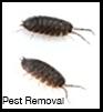 Pest Control Peabody MA