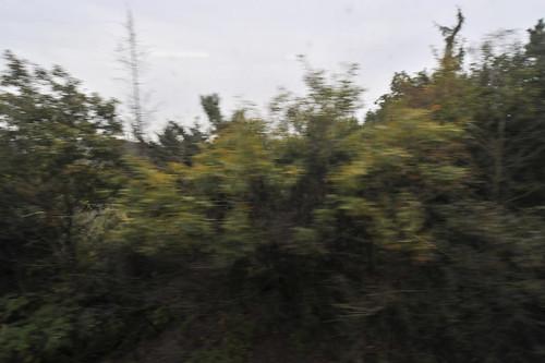 20111118-_DSC5163