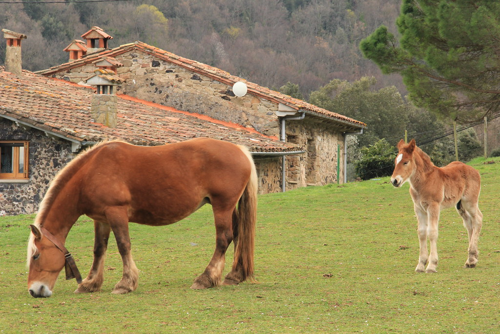 Farmhouses and horses, Garrotxa Natural Park