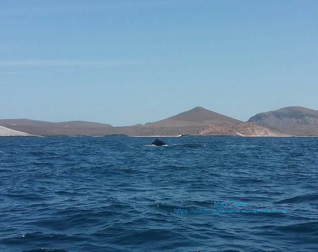 La Paz Mexico Humpback whale