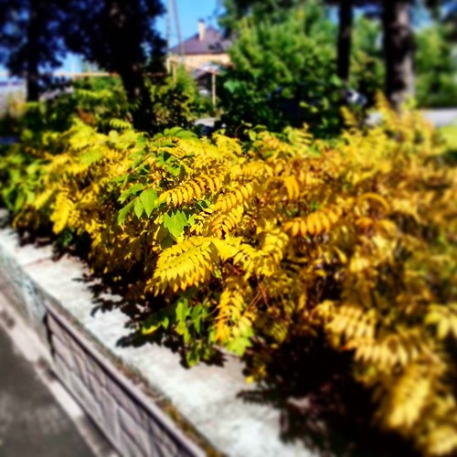 last_autumn_colors